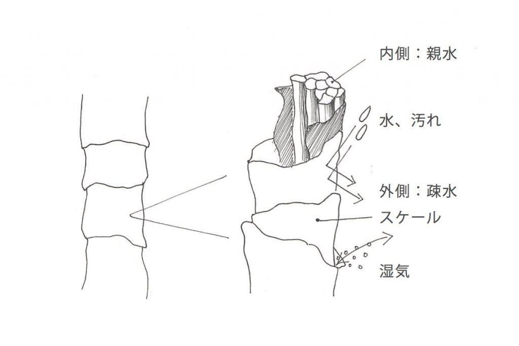 ウールの構造